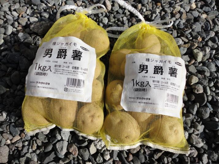 男爵芋の種芋