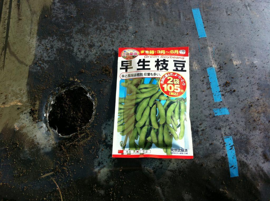 早生枝豆の種まき