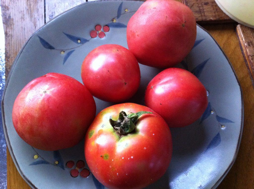 トマトの初収穫①(7月2日)