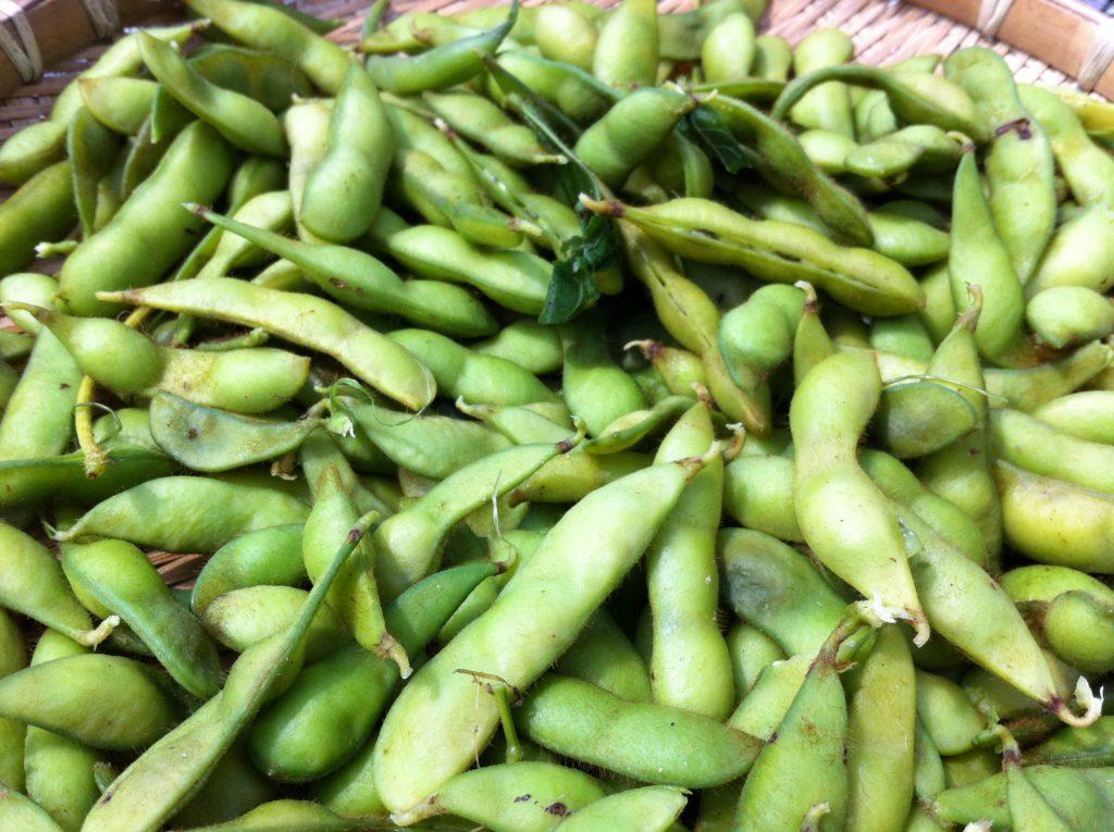 最後の枝豆を収穫して塩茹で(7月13日)