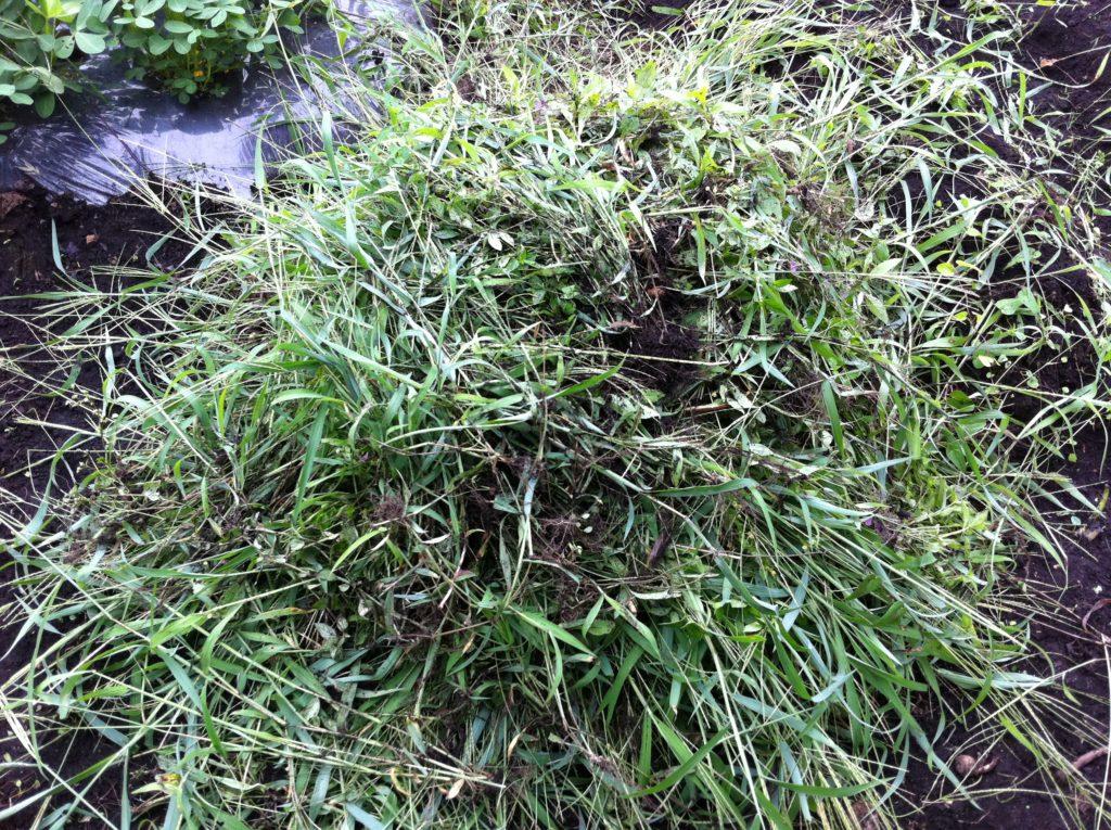 除草した雑草の山