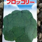 ネットで購入したブロッコリーの種