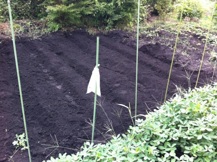 大根の種まき前の畝