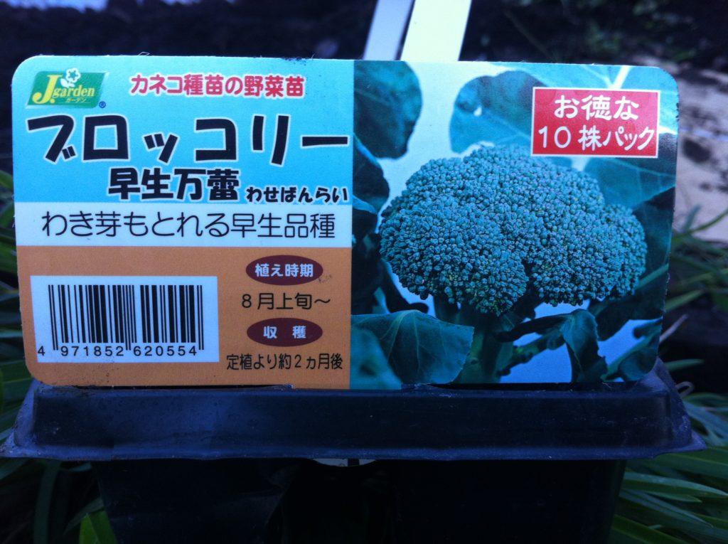 ブロッコリーの苗10個セット①