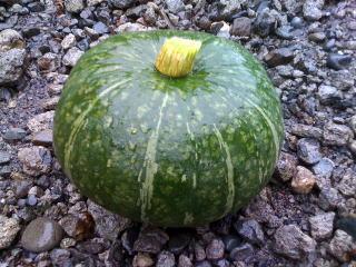 収穫したかぼちゃ